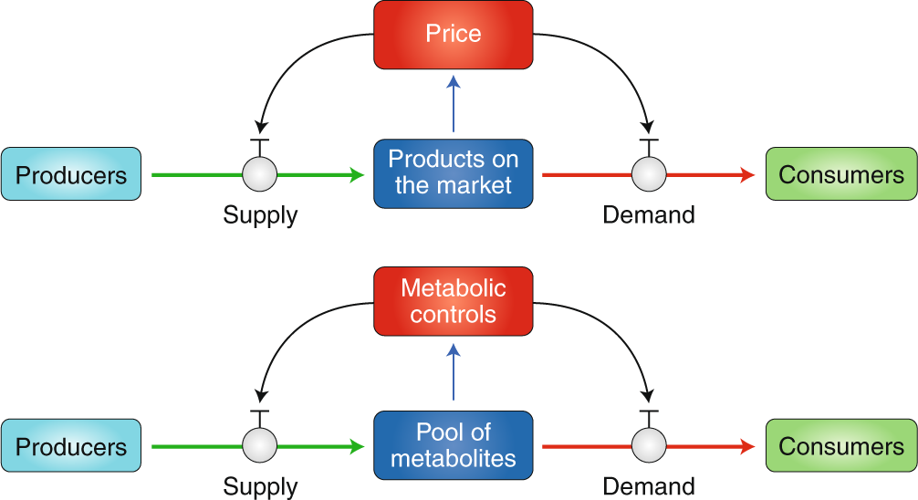 Control strategies in systemic metabolism