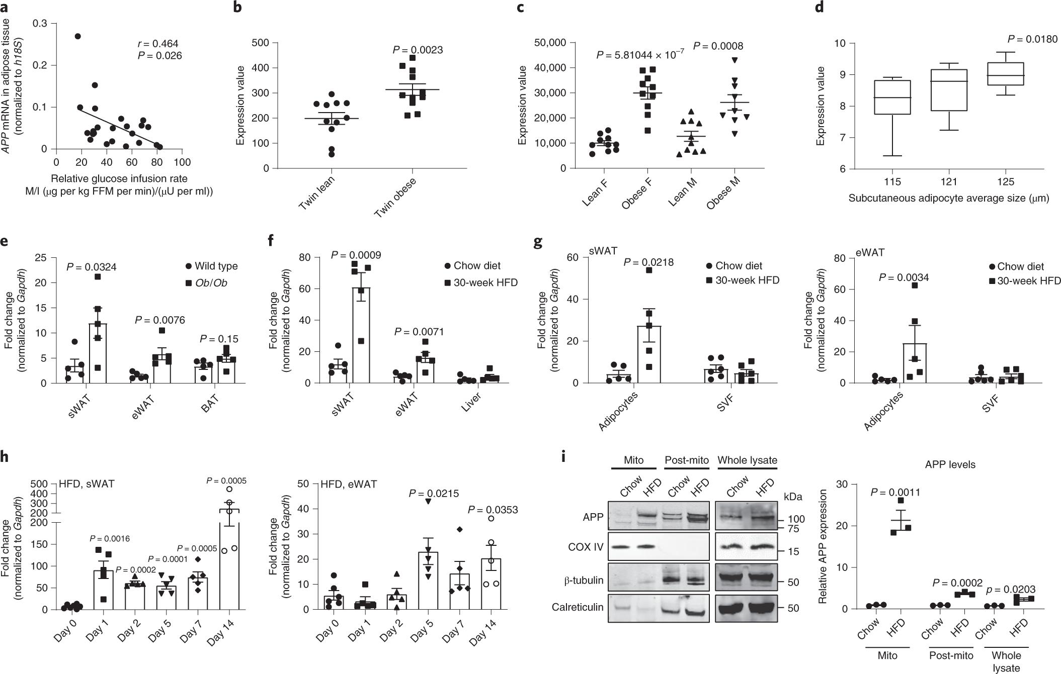 Dysregulation of amyloid precursor protein impairs adipose tissue mito