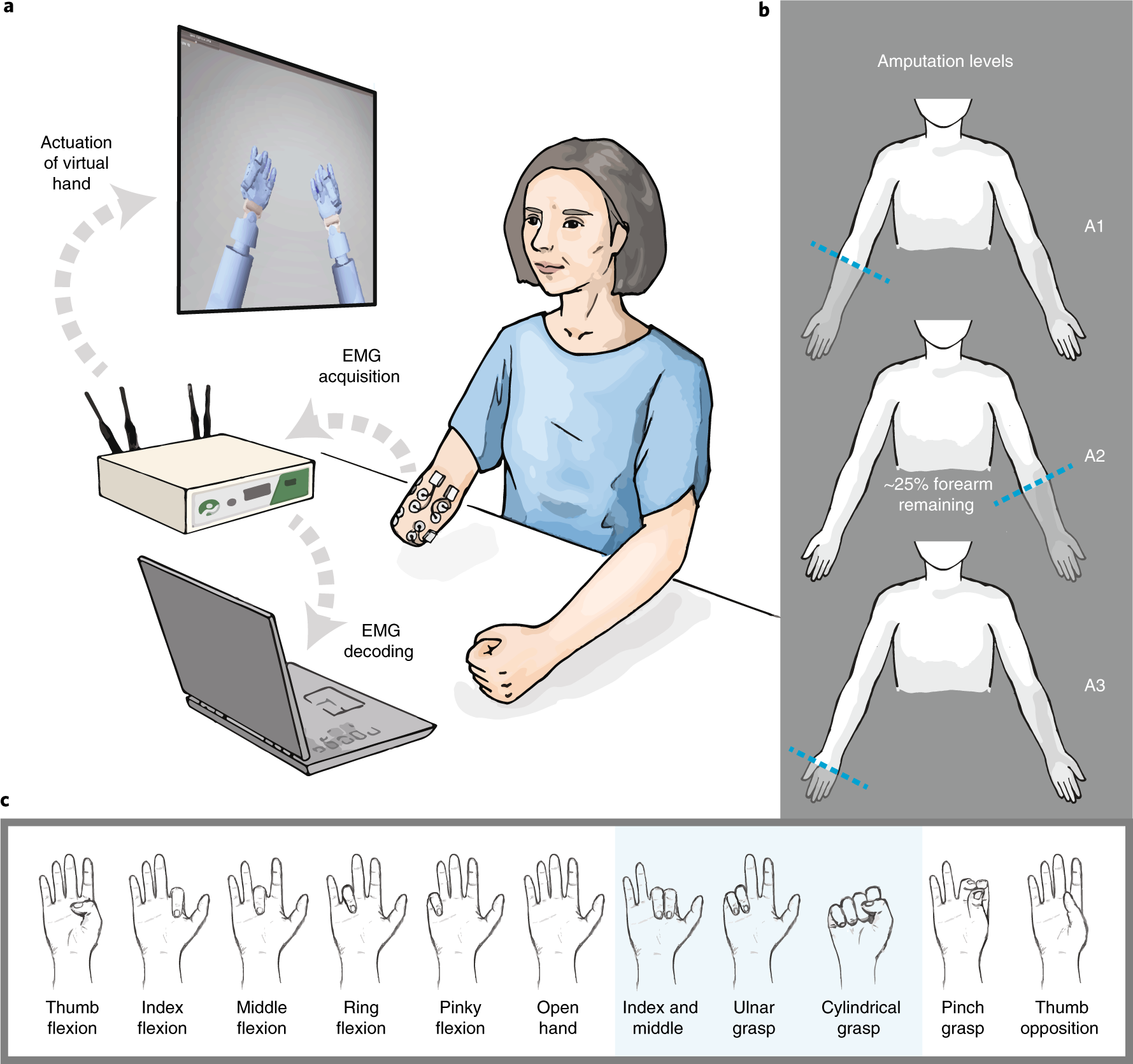 Shared human–robot proportional control of a dexterous