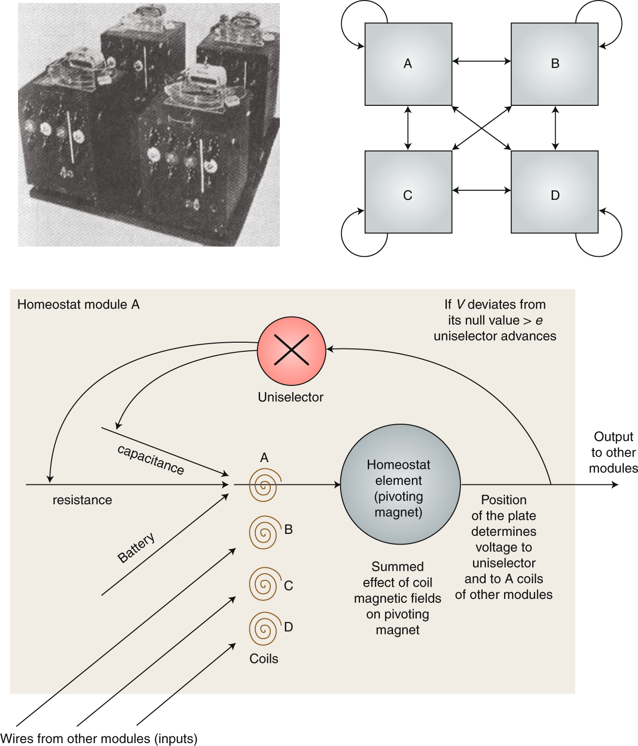 Homeostasis And Soft Robotics In The