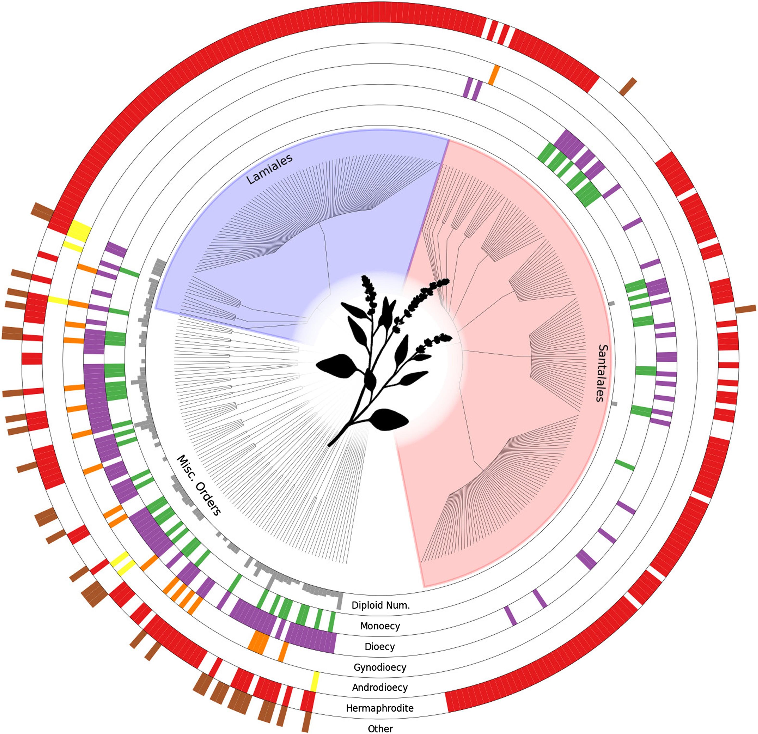 Ana Paula Fernández Santacruz Ruiz tree of sex: a database of sexual systems | scientific data