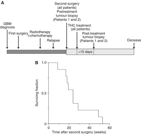 A pilot clinical study of Δ 9 -tetrahydrocannabinol in patients with