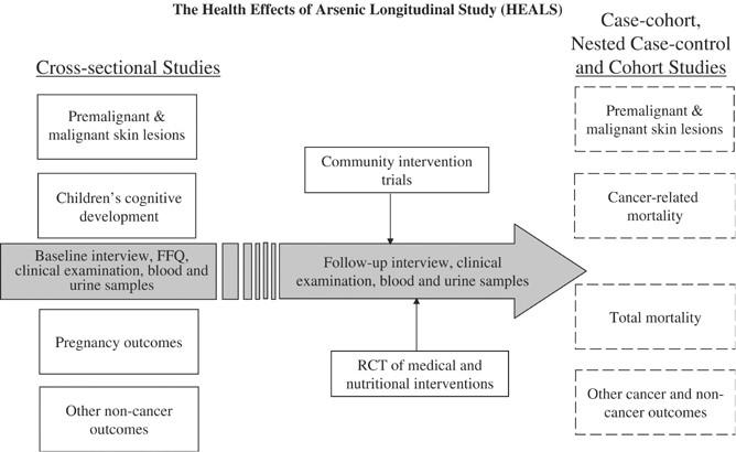 Health Effects of Arsenic Longitudinal Study (HEALS