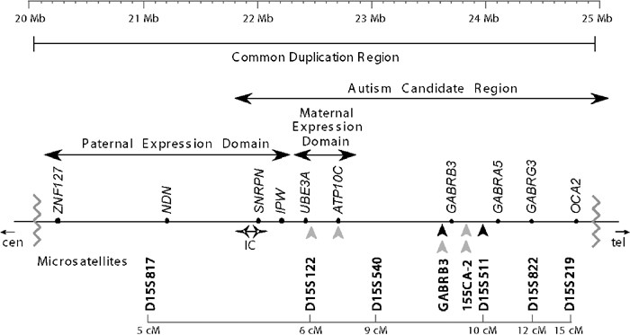 Molecular genetics of autism spectrum disorder | Molecular