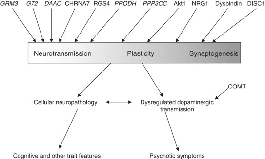 Genetic Convergence Between Cognition >> Schizophrenia Genes Gene Expression And Neuropathology On The