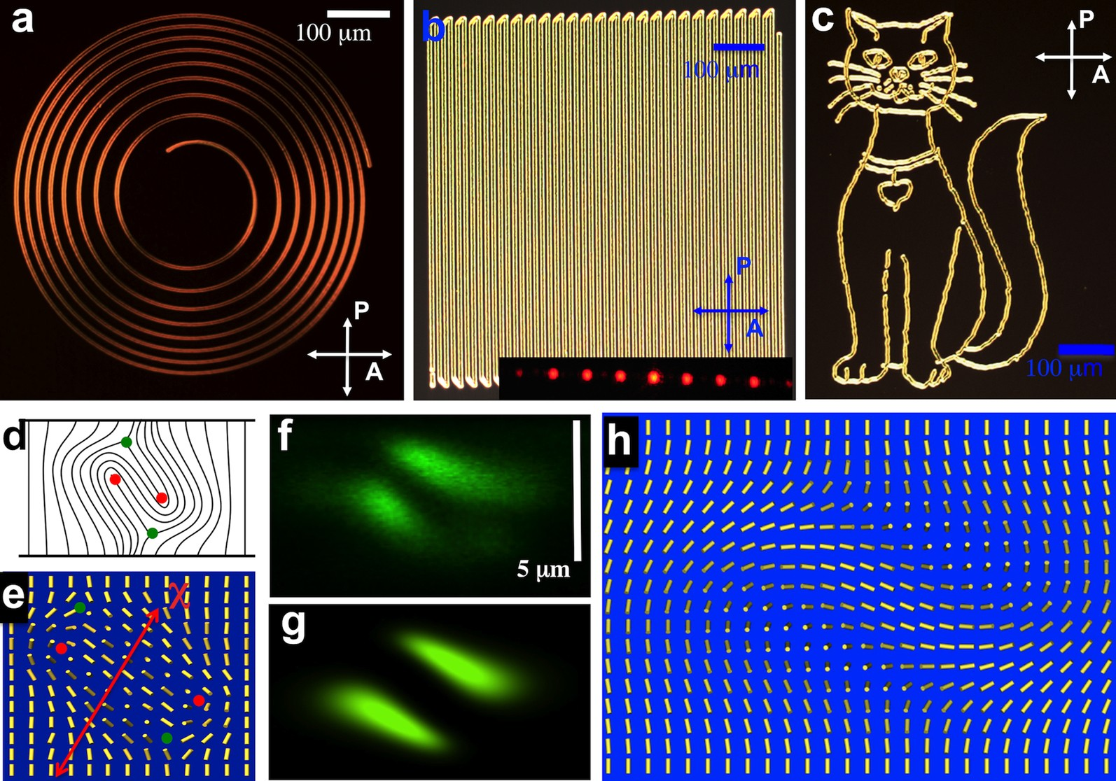 Laser Directed Hierarchical Assembly Of Liquid Crystal