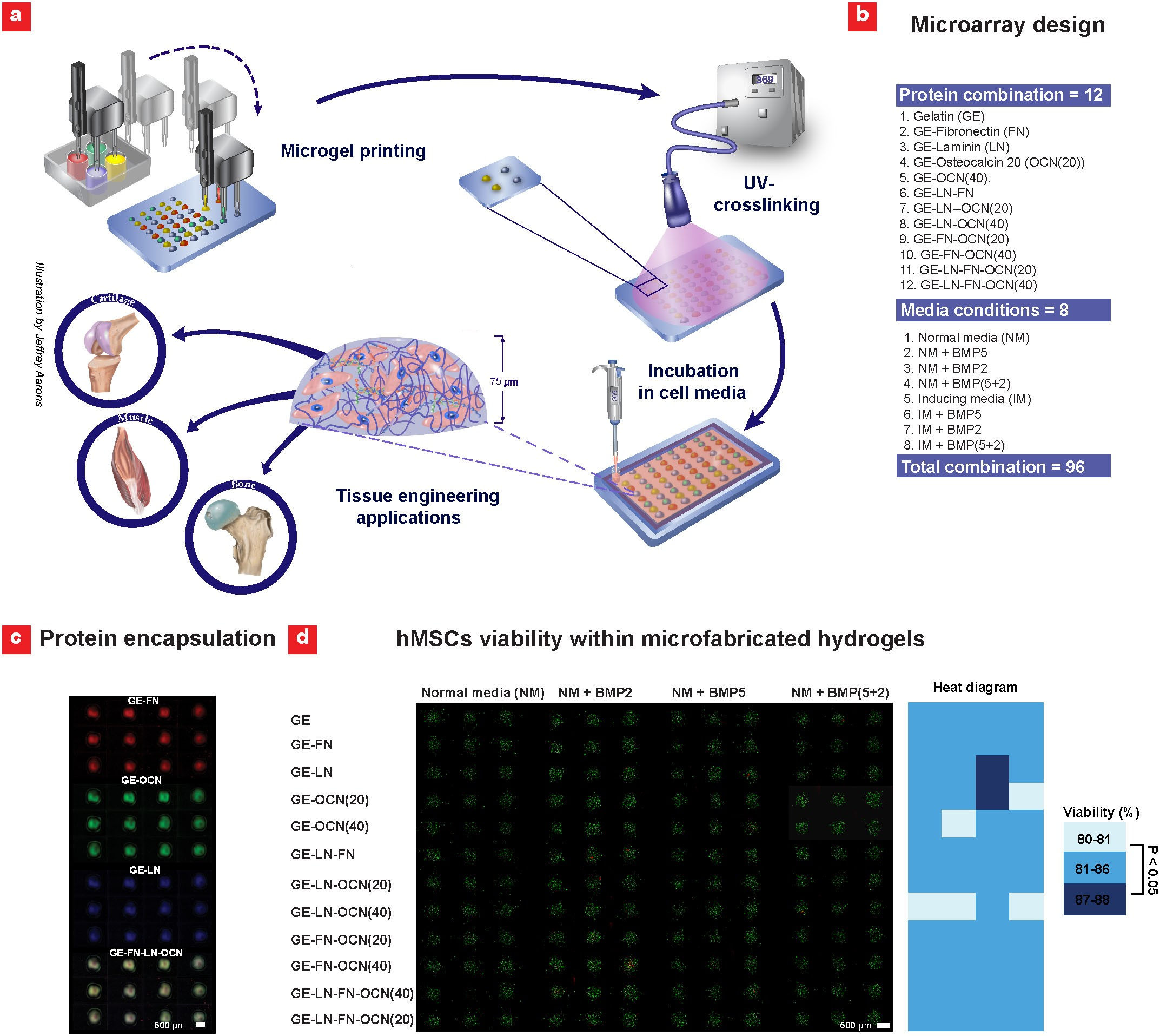 A combinatorial cell-laden gel microarray for inducing