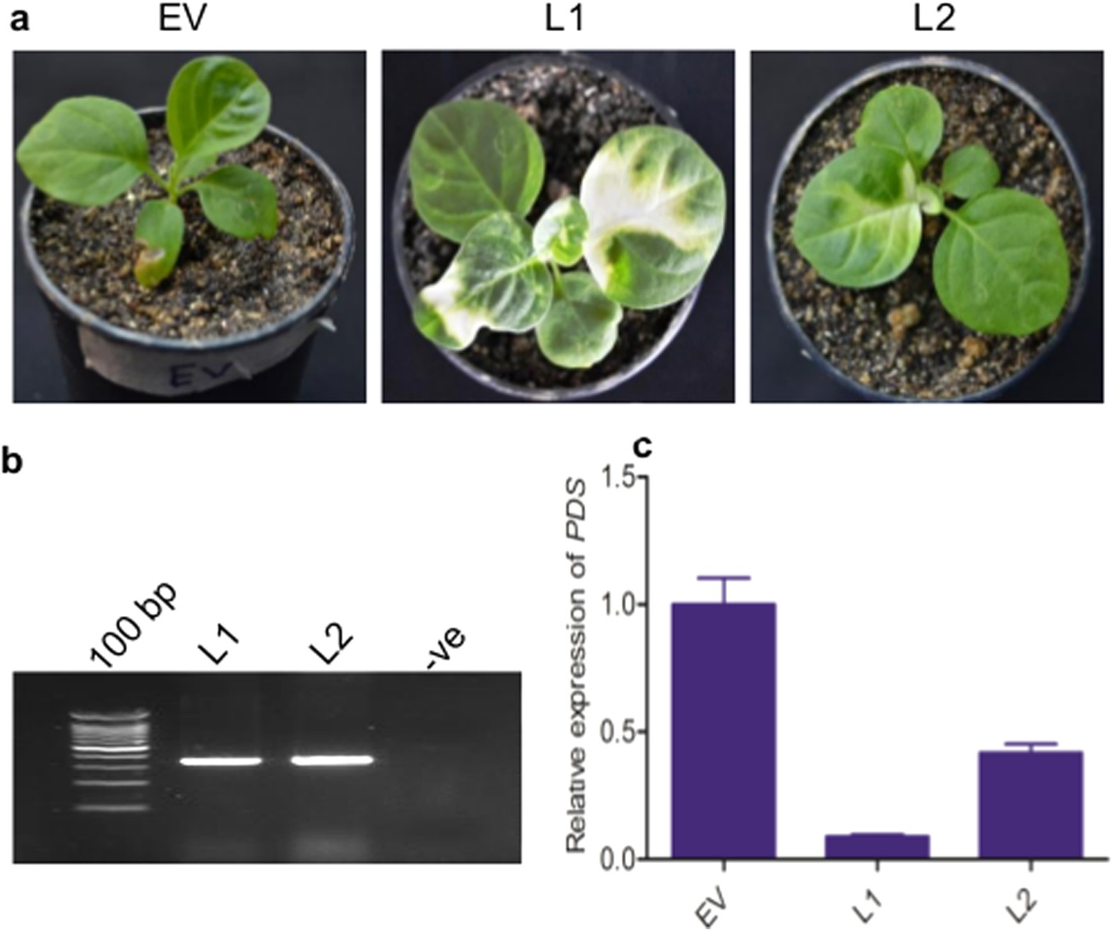 Silencing of sterol glycosyltransferases modulates the ...