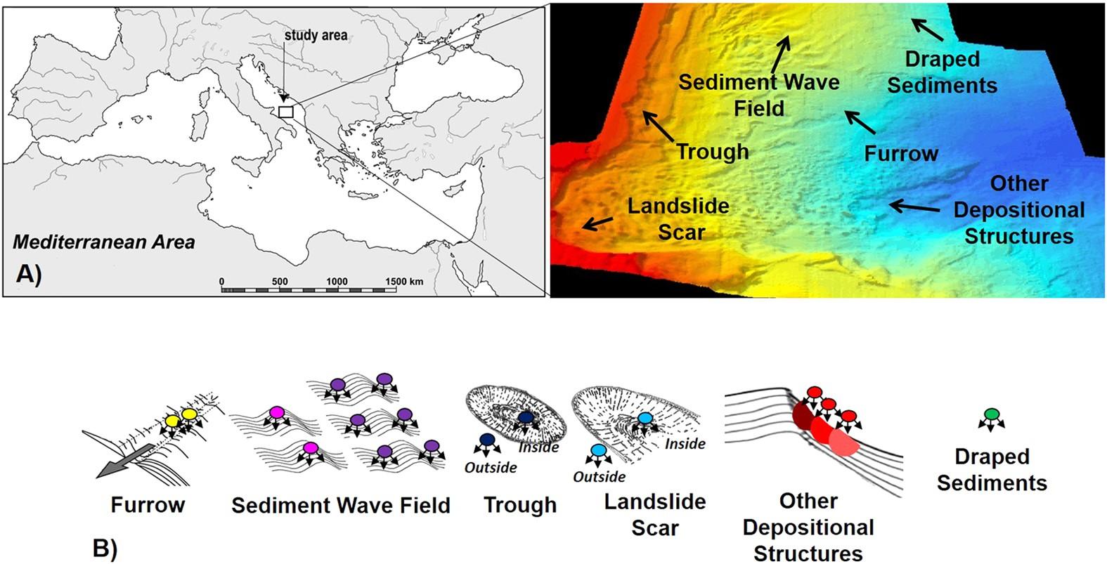 Seafloor Heterogeneity Influences The Biodiversity Ecosystem