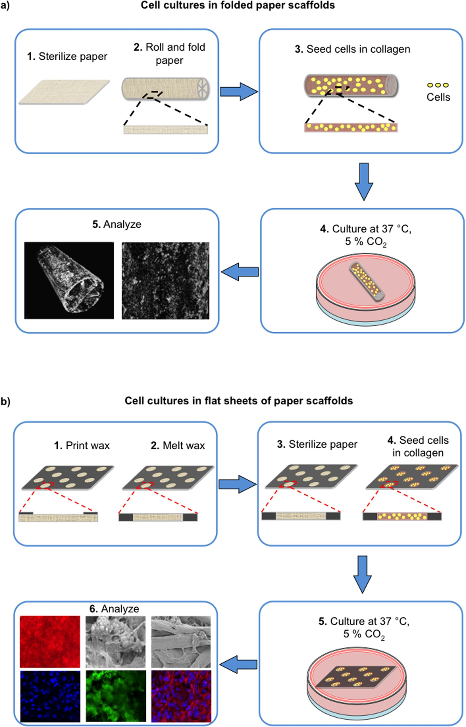 Biomineralization Guided by Paper Templates   Scientific Reports