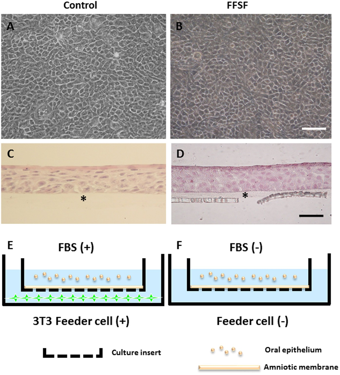 Development of functional human oral mucosal epithelial stem