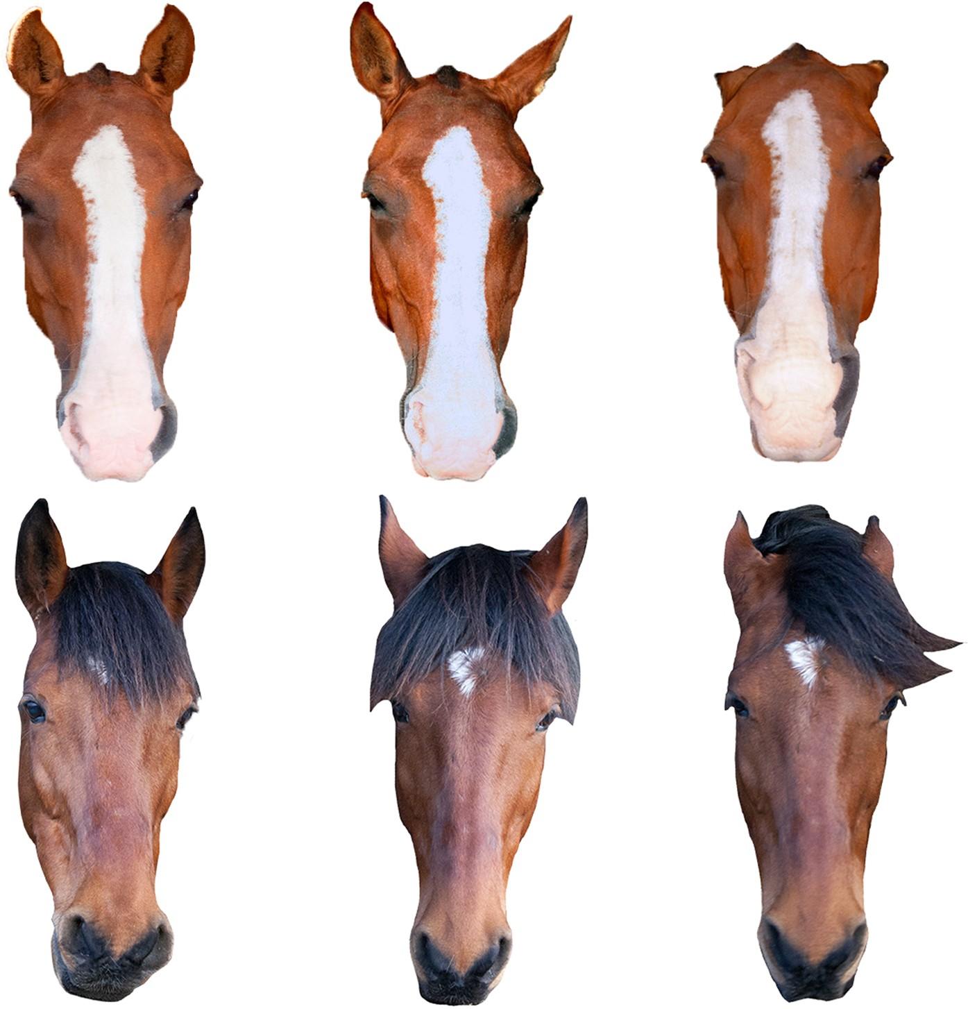 Chosen By A Horse PDF Free Download
