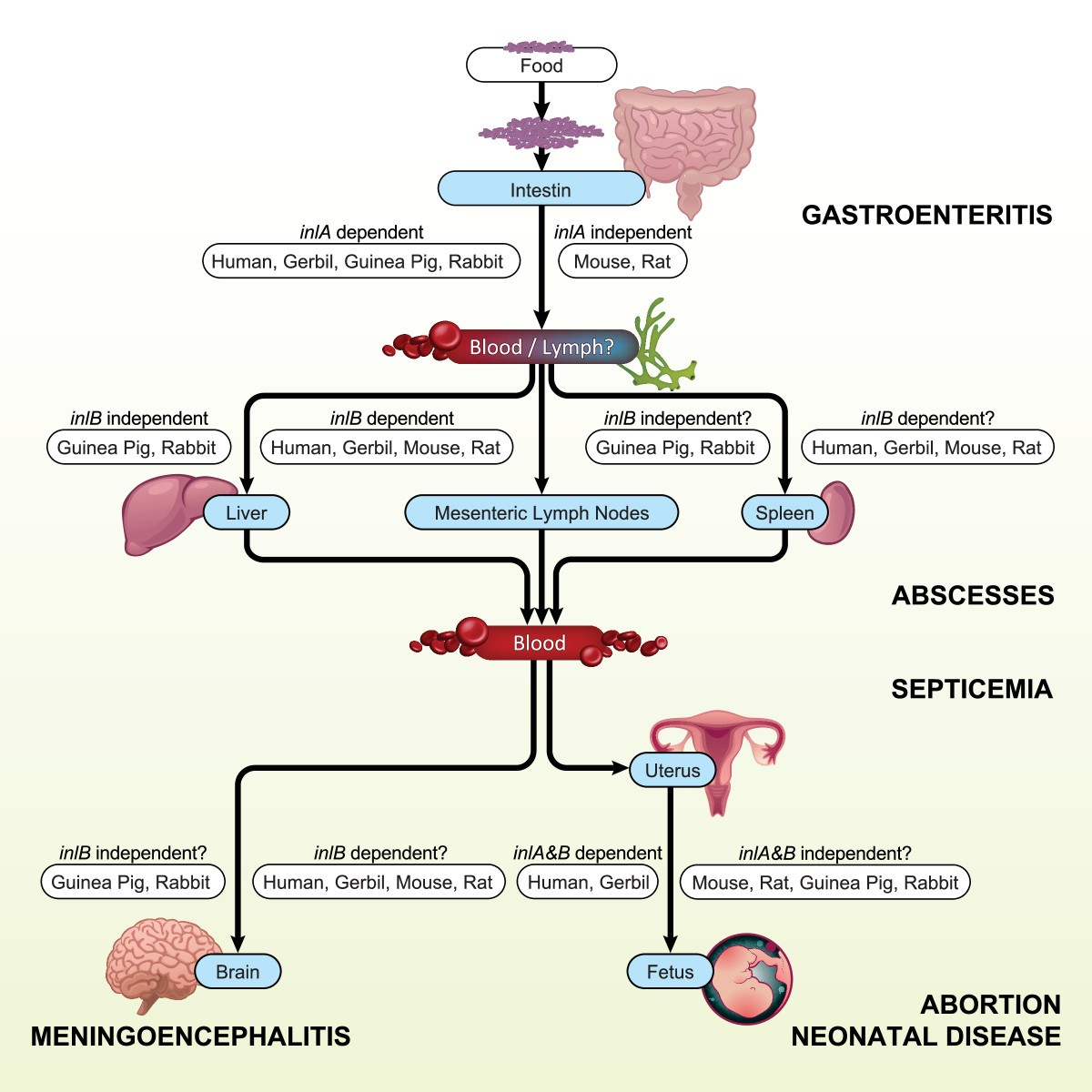 a3b59afe5 Animal models of listeriosis  a comparative review of the current ...