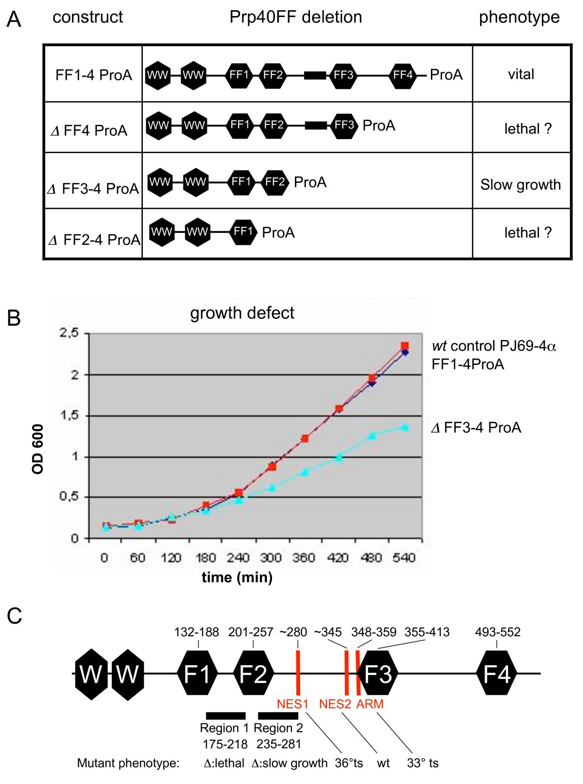 The ff domains of yeast u1 snrnp protein prp40 mediate interactions figure 4 fandeluxe Choice Image