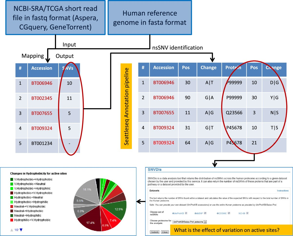 Non Synonymous Variations In Cancer And Their Effects On The Human Here Are Select Methylation Diagrams Dr Amy References Conferences Figure 2