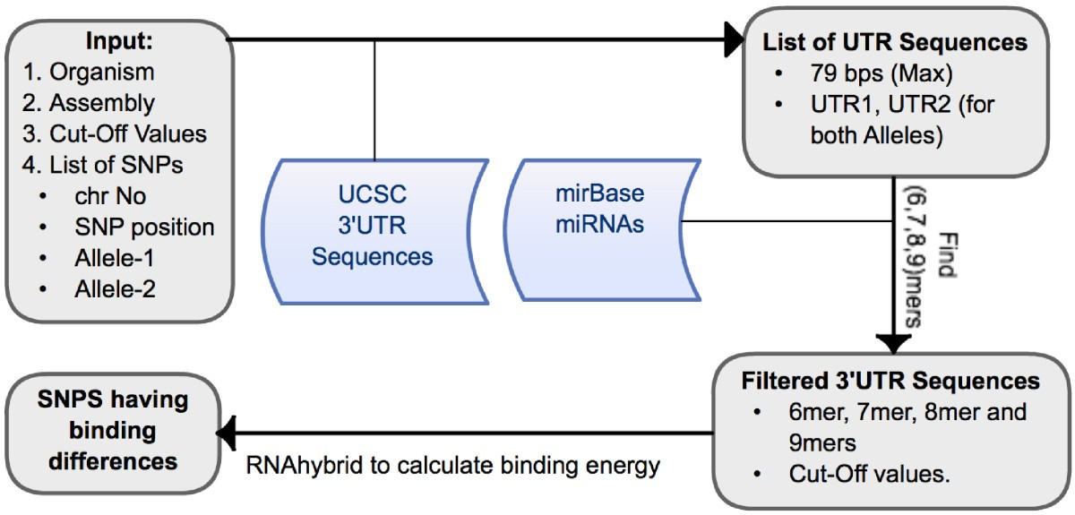 mrSNP: Software to detect SNP effects on microRNA binding