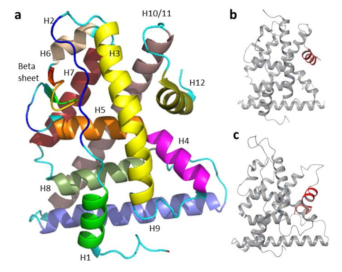 Competitive Molecular Docking Approach For Predicting Estrogen
