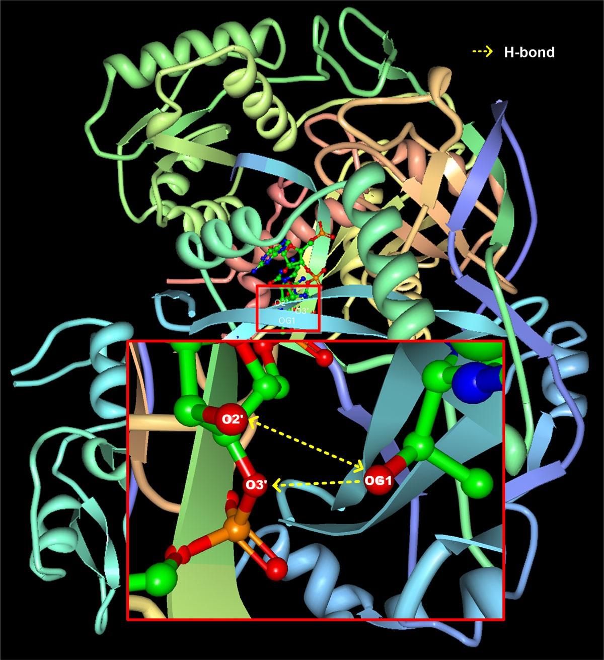 DBBP: Database Of Binding Pairs In Protein-nucleic Acid