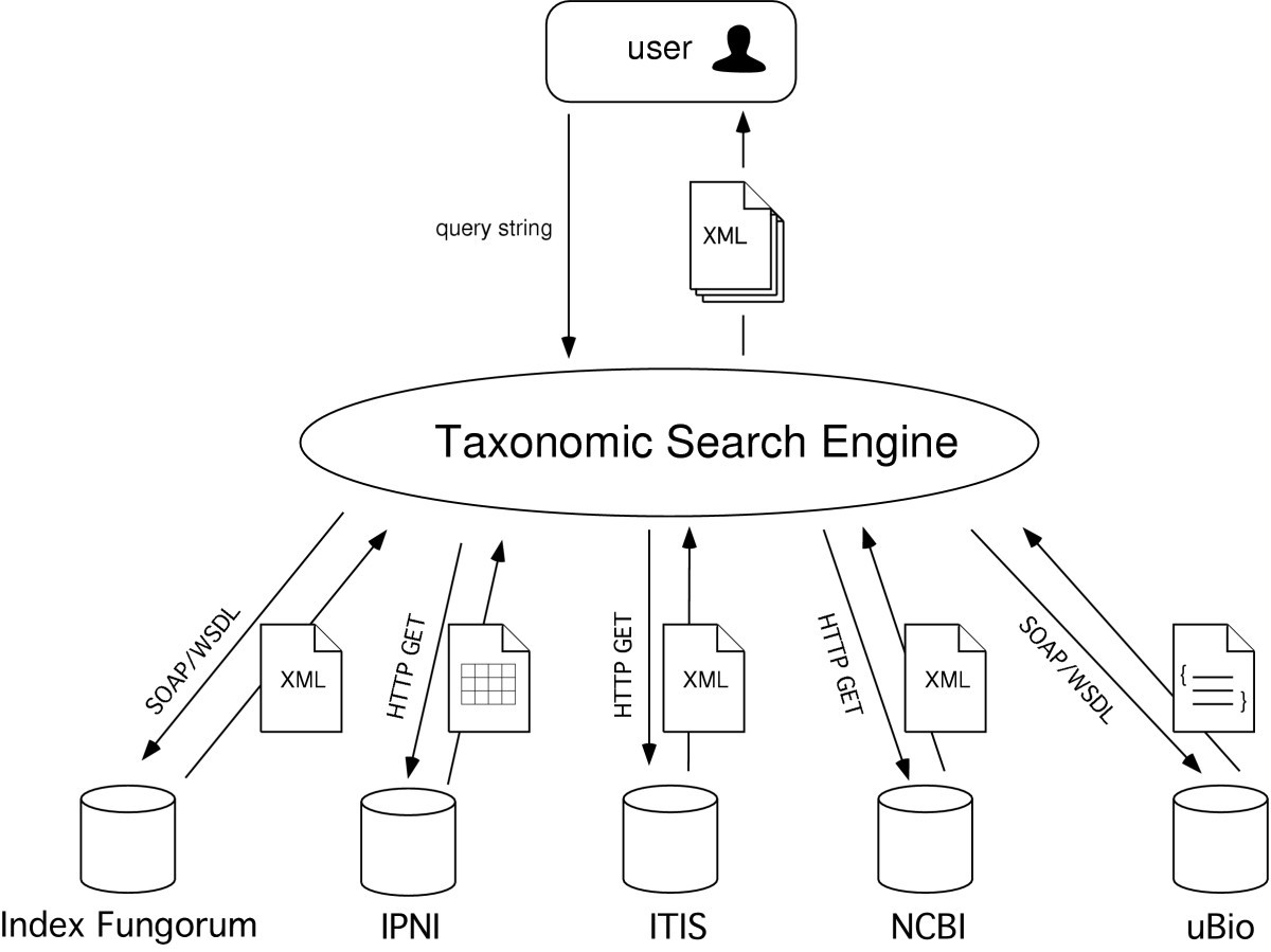 A Taxonomic Search Engine Federating Databases Using Web Diagram Figure 1 Architecture Of The