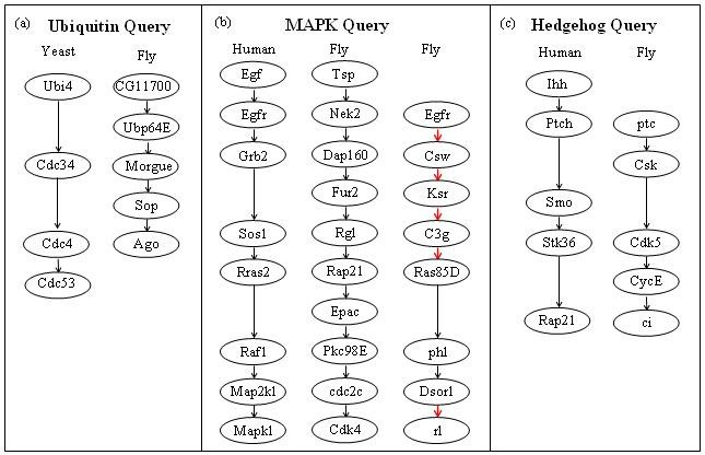 QPath: a method for querying pathways in a protein-protein