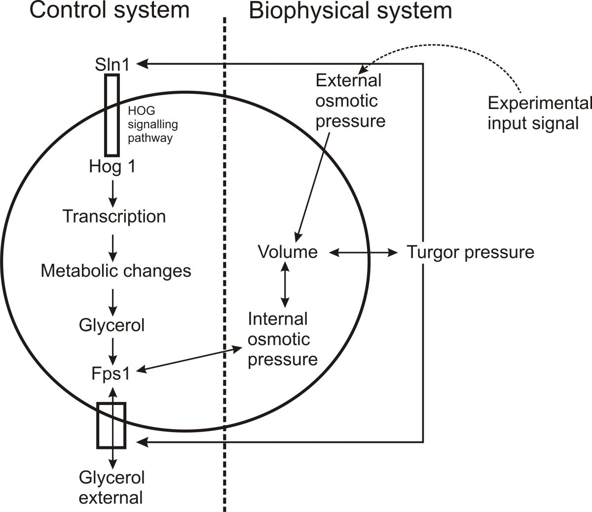 Modeling Biochemical Transformation Processes And Information Wiring Diagrams Sbo Community Figure 1