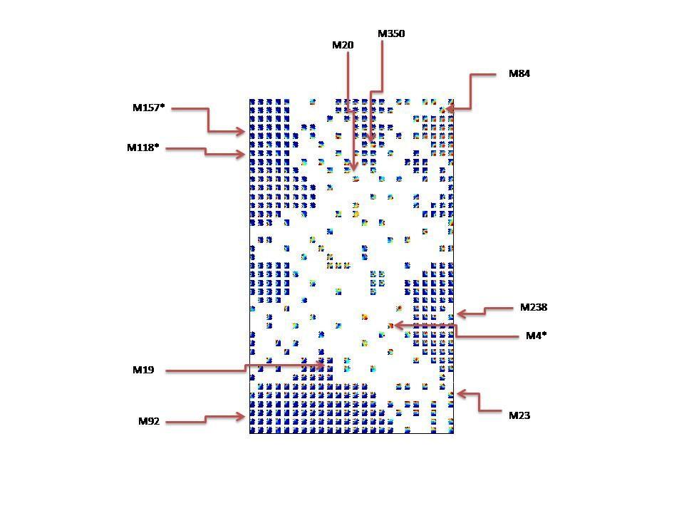 Identification Of Biomarkers For Genotyping Aspergilli Using Non