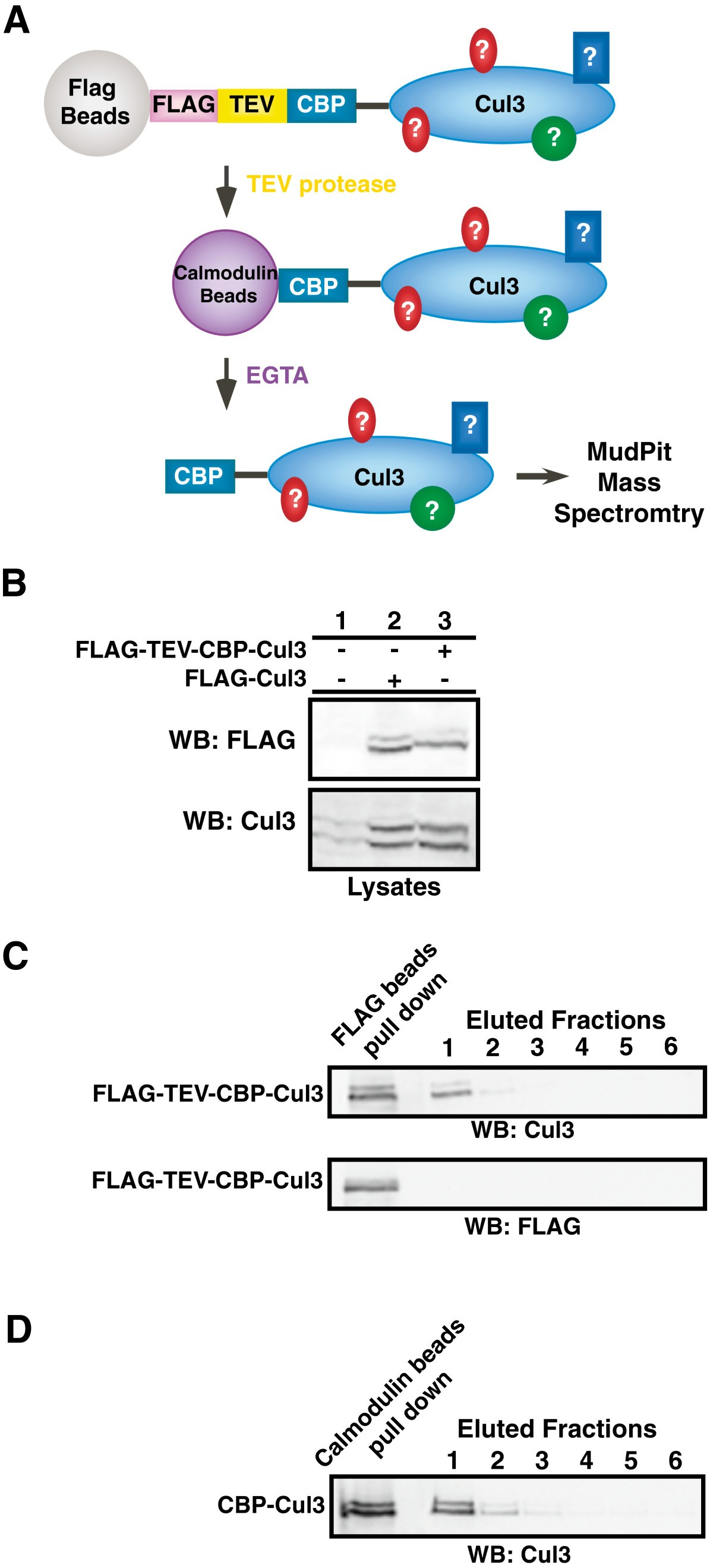 Novel Cul3 Binding Proteins Function To Remodel E3 Ligase Complexes Bmc Molecular And Cell Biology Full Text