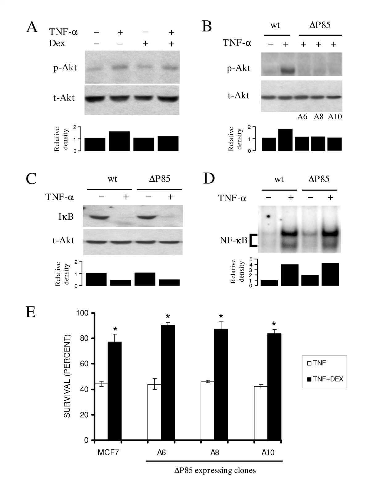 Dexamethasone protection from TNF-alpha-induced cell in MCF-7 ... on