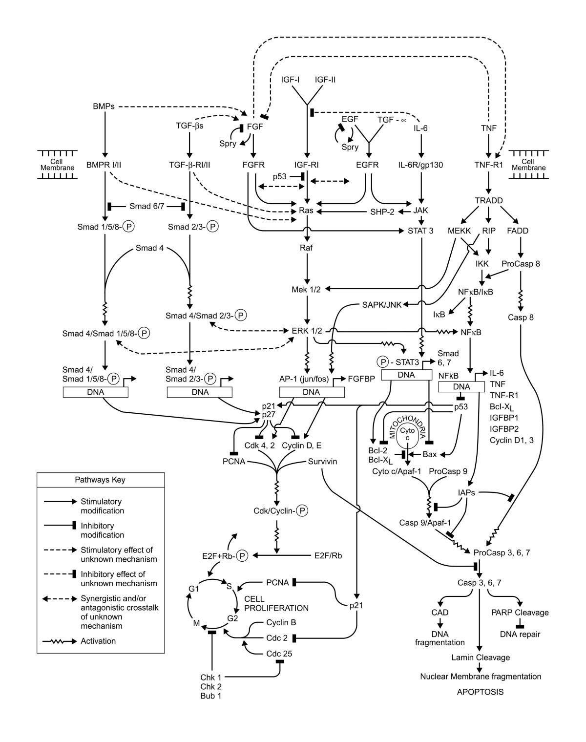1952 mg td wiring diagram database 1951 MG TD Colors the functional genomic response of developing embryonic 1956 mg td 1952 mg td