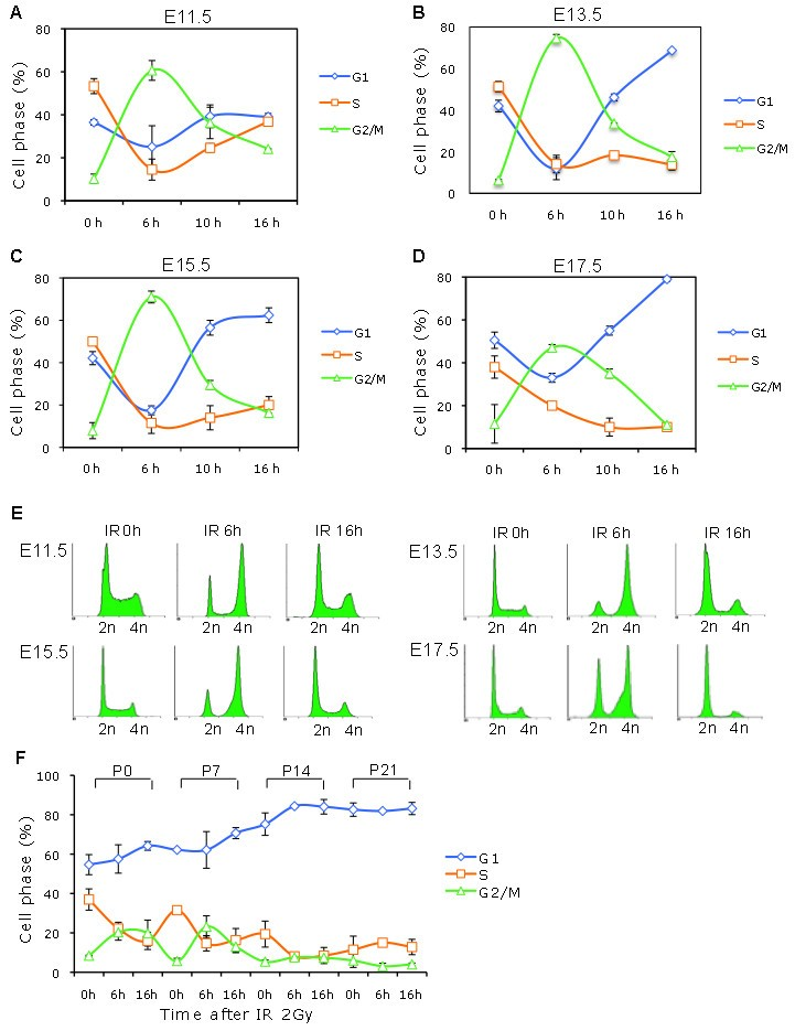 G1 Checkpoint Establishment In Vivo During Embryonic Liver