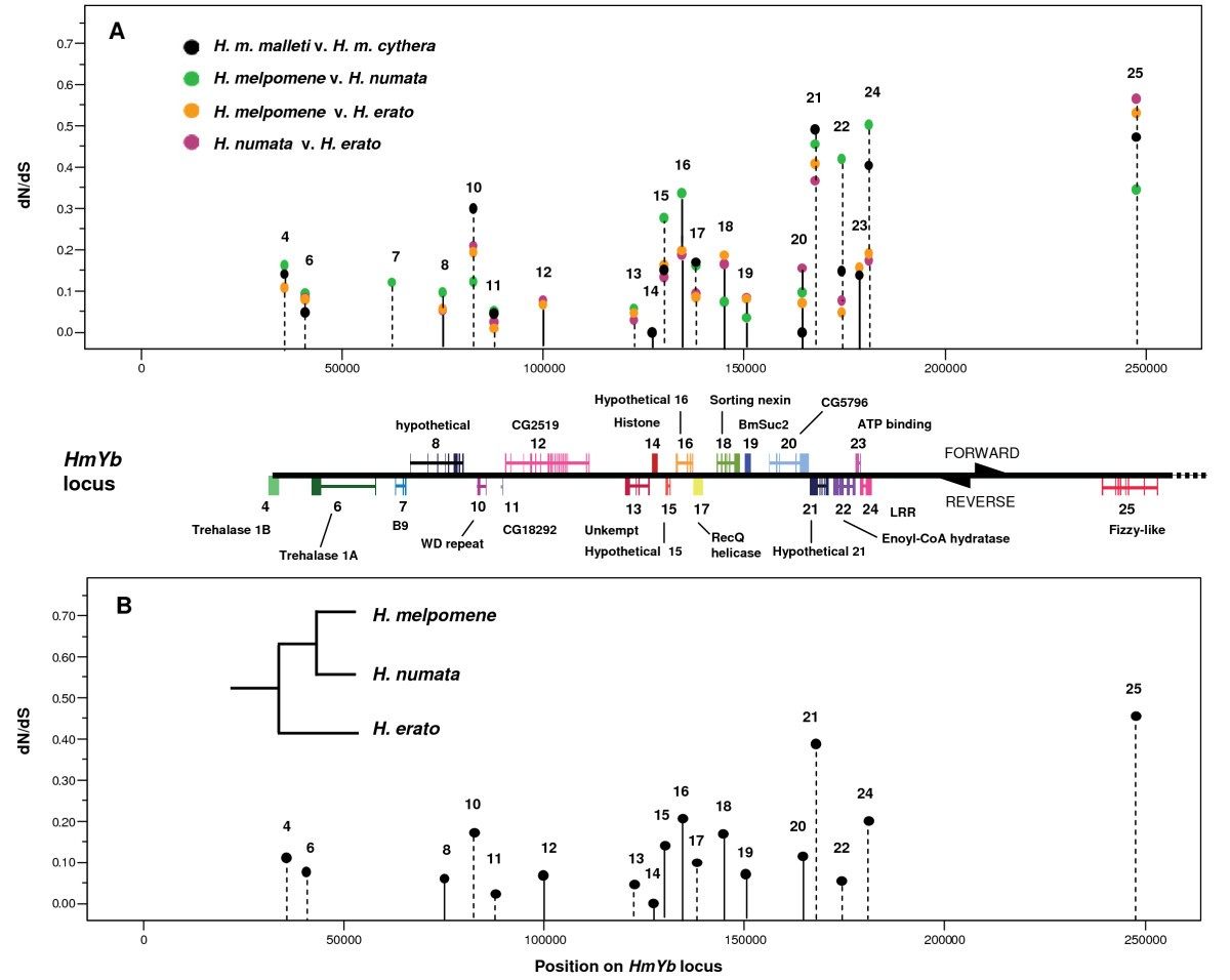 Signatures of selection in loci governing major colour