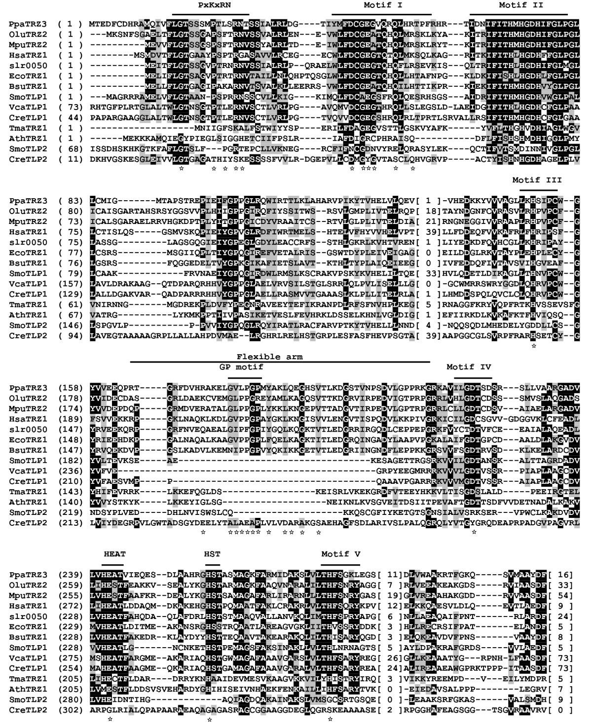 A Survey Of Green Plant Trna 3 End Processing Enzyme Trnase Zs Artemis Fan Wiring Diagram Figure 1
