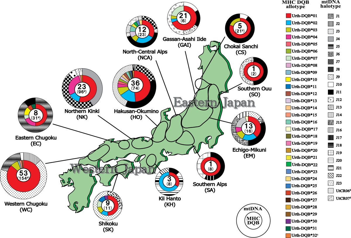 black culture in japan laval