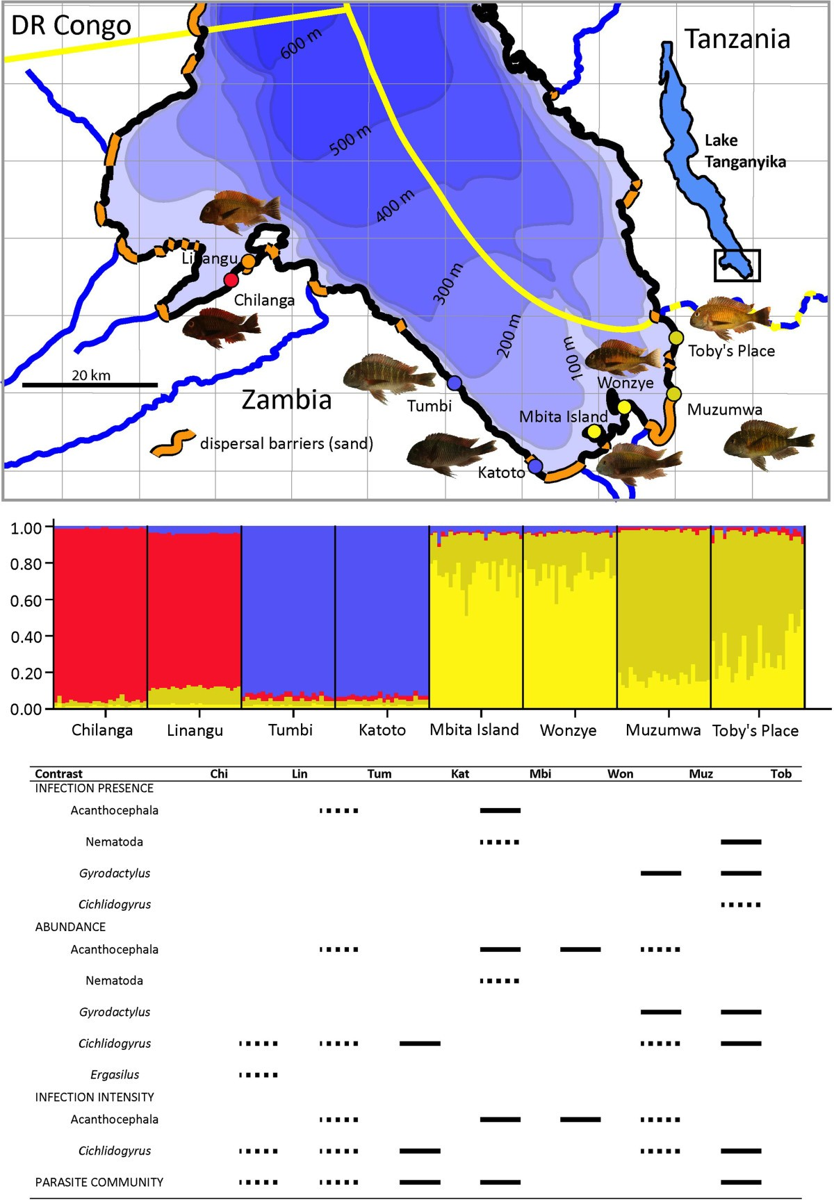 Contrasting Parasite Communities Among Allopatric Colour Morphs Of Voucher Map Nominal 100 Rb Figure 1