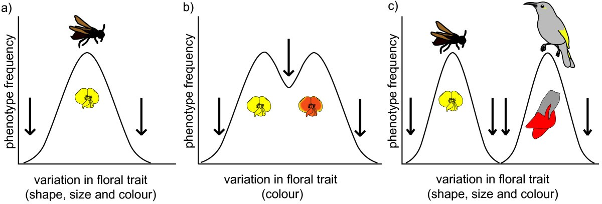 Phenotypic Selection In Nature