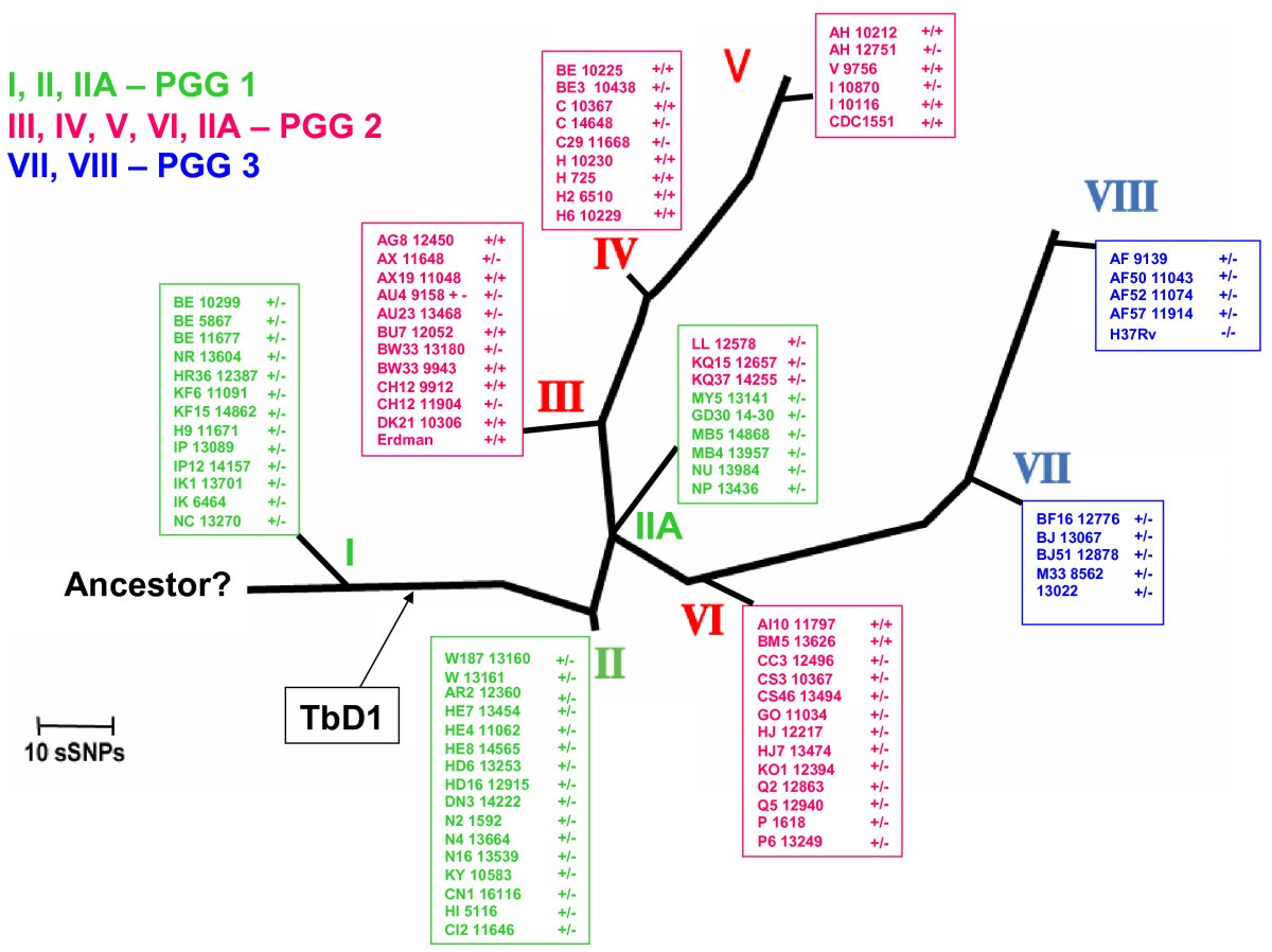 Insights Into The Evolutionary History Of Tubercle Bacilli As 292 Y Block Wiring Diagram Figure 9