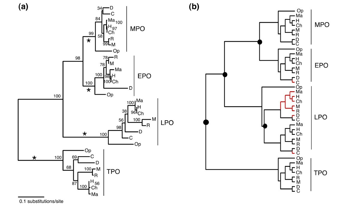 The Phylogeny Of Mammalian Heme Peroxidases And Evolution Electronic Circuits Systems Ryder Pdf Figure 3