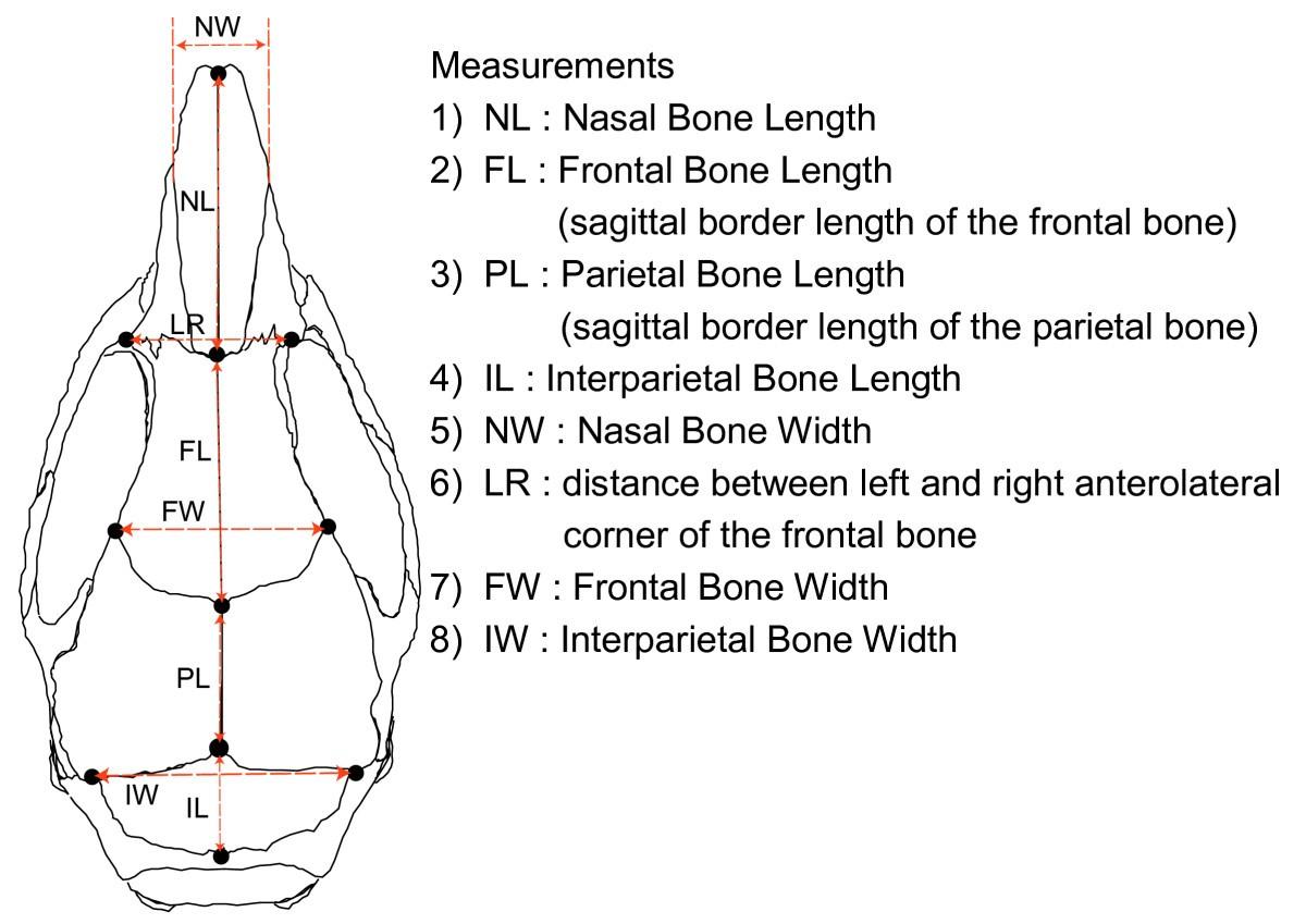 Cranial Bone Morphometric Study Among Mouse Strains Bmc
