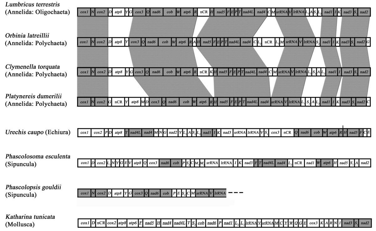 besides annelids segmentation is also seen in