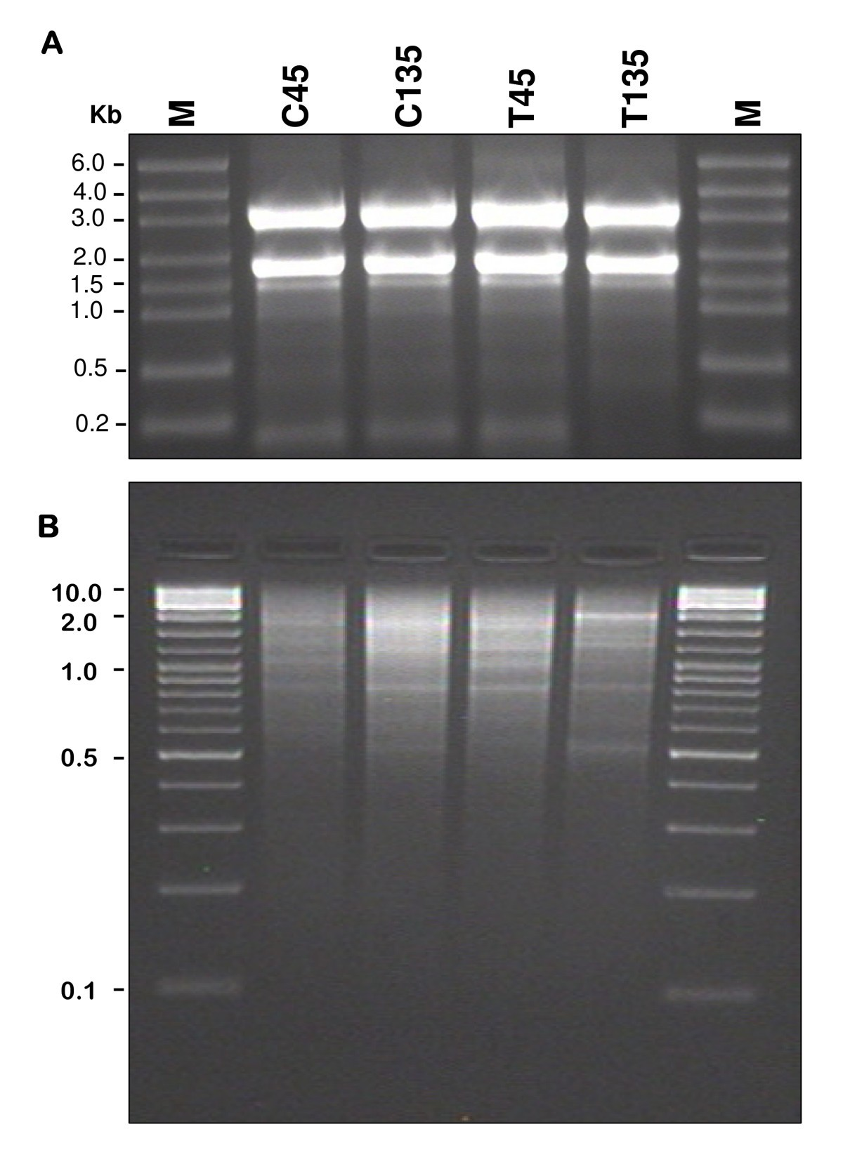 comparative 454 pyrosequencing of transcripts from two