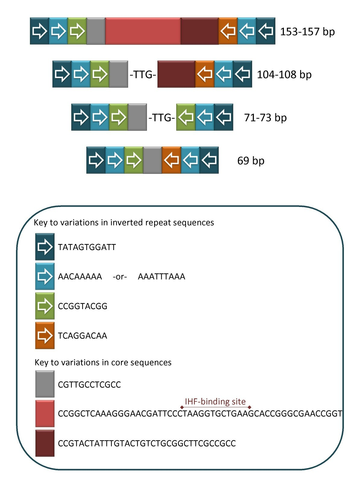 comparative analysis of two neisseria gonorrhoeae genome sequences