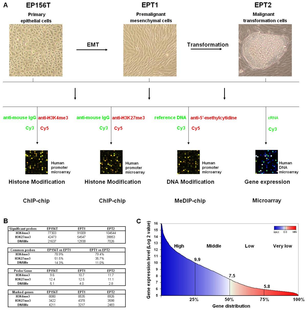 Global profiling of histone and dna methylation reveals epigenetic figure 1 malvernweather Choice Image