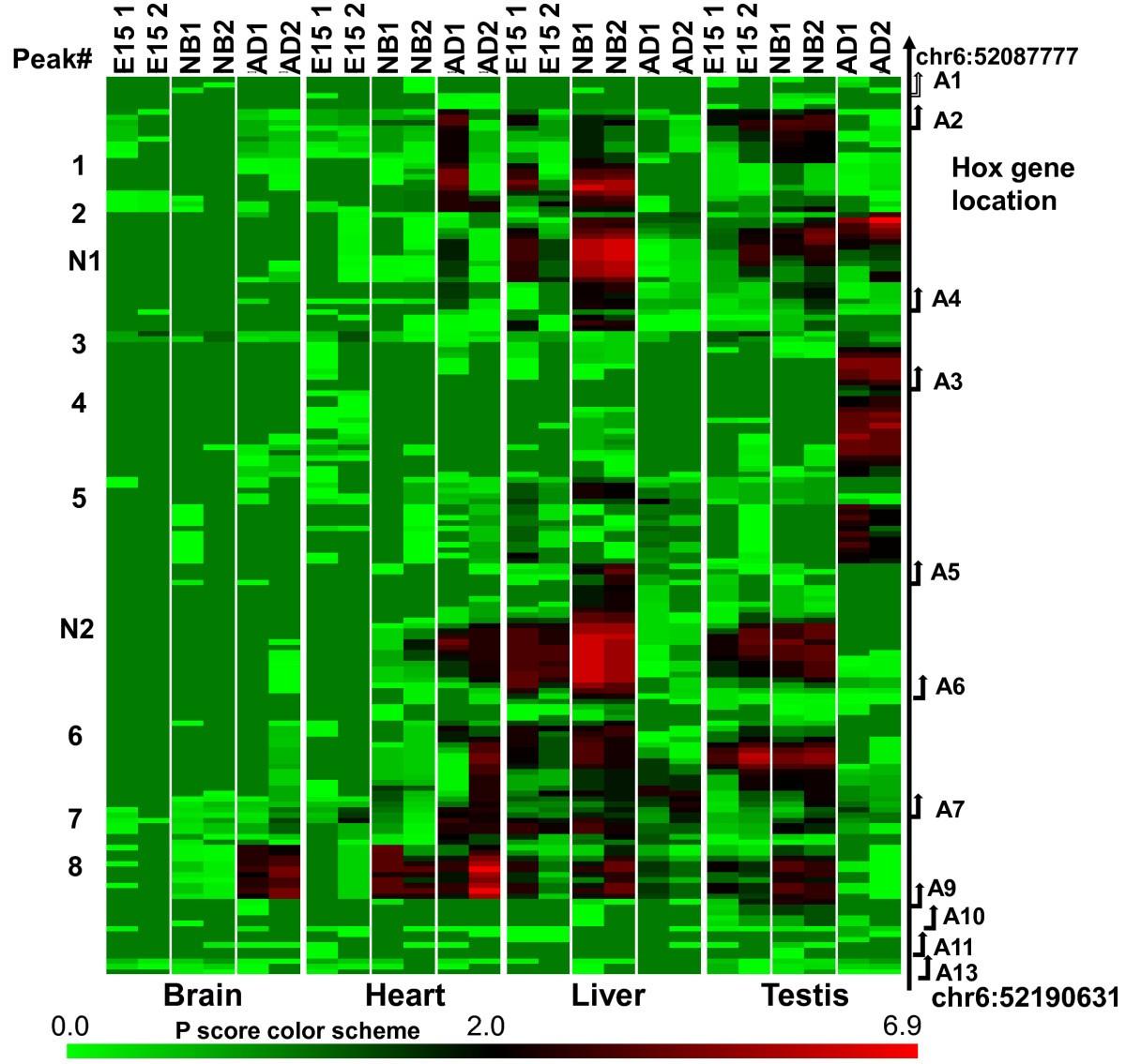 Genome Wide Survey Reveals Dynamic Widespread Tissue Specific