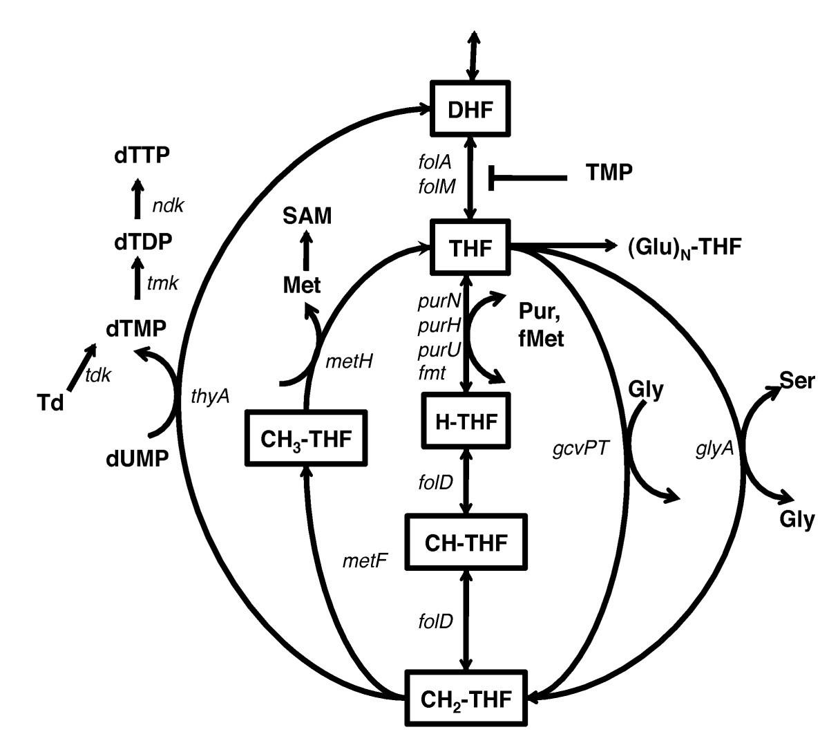 The Association Of Dna Damage Response And Nucleotide Level Jacinto 6 Block Diagram Figure 1