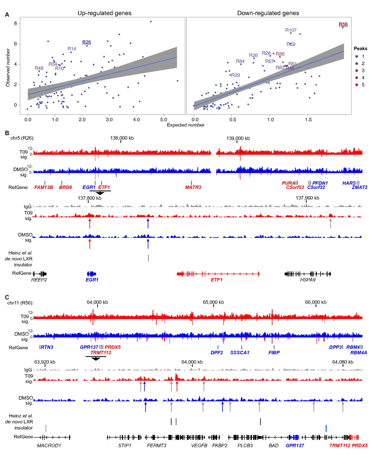 Genome Wide Landscape Of Liver X Receptor Chromatin Binding And Gene