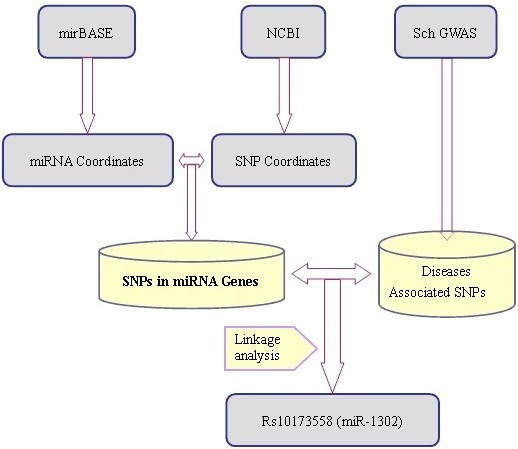 Mirsnp A Database Of Polymorphisms Altering Mirna Target Sites