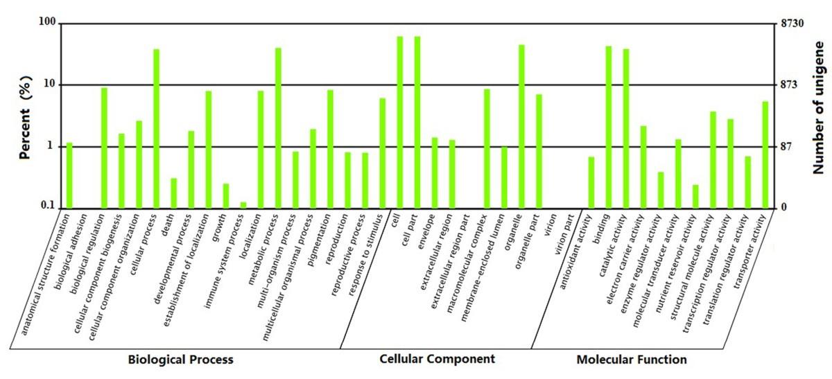 Transcriptome analysis of sacha inchi plukenetia volubilis l figure 4 fandeluxe Images