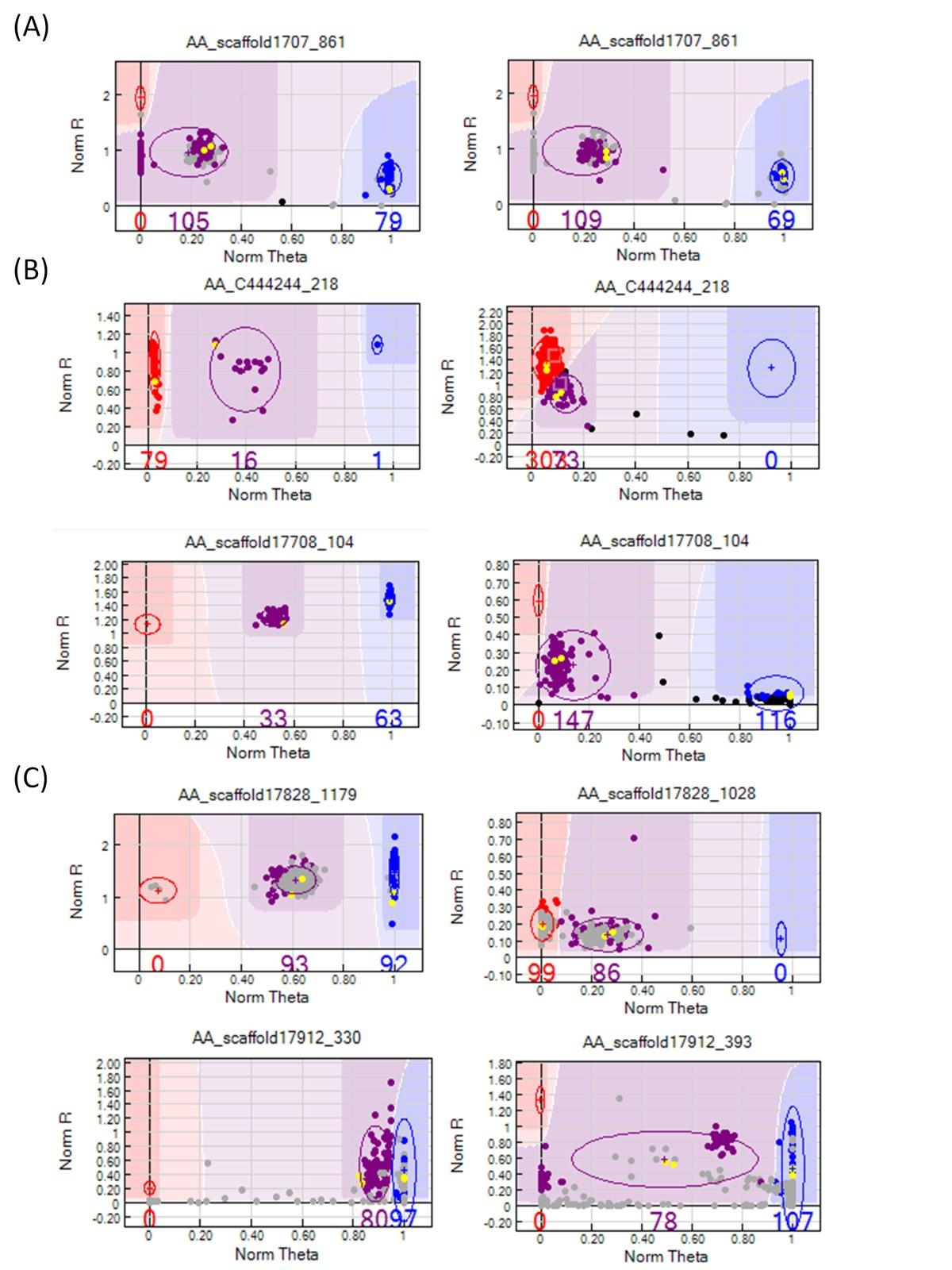 Development of high-throughput SNP-based genotyping in Acacia ... 8e63ed3514