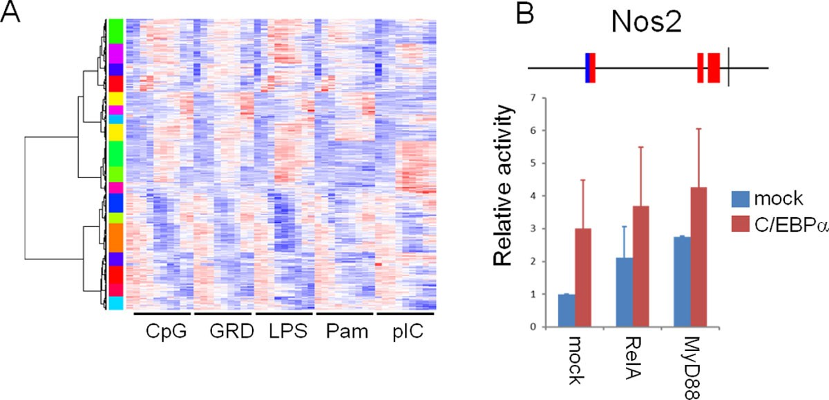 A Novel Unbiased Measure For Motif Co Occurrence Predicts