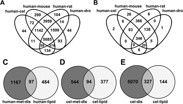 comparative genomics and functional study of lipid metabolic genes in caenorhabditis elegans